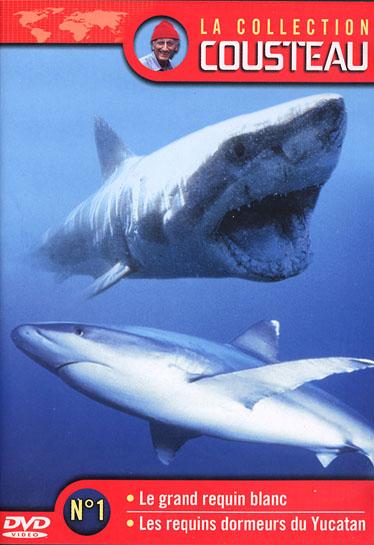 Tout près du grand requin blanc affiche